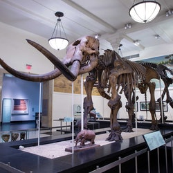 Imagen American Museum of Natural History Small-Group Tour