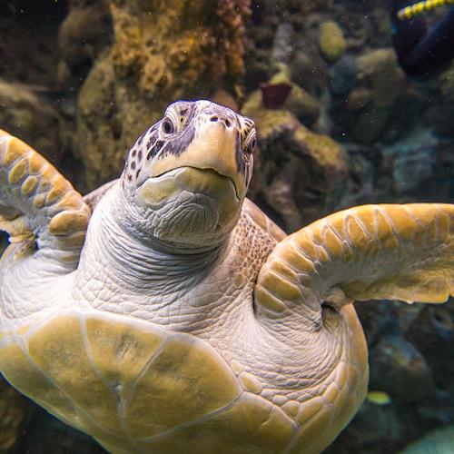 Tampa ZooQuarium: Entrada combinada para ZooTampa y Florida Aquarium