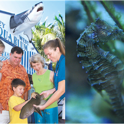 Tickets, museums, attractions,Key West Aquarium