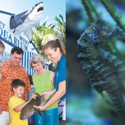 Tickets, museos, atracciones,Acuario Key West