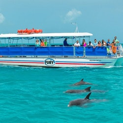 Tickets, museums, attractions,Dolphin Watching