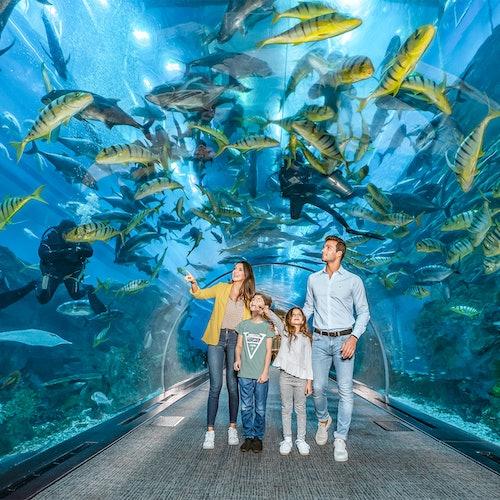 Dubai Aquarium + Underwater Zoo