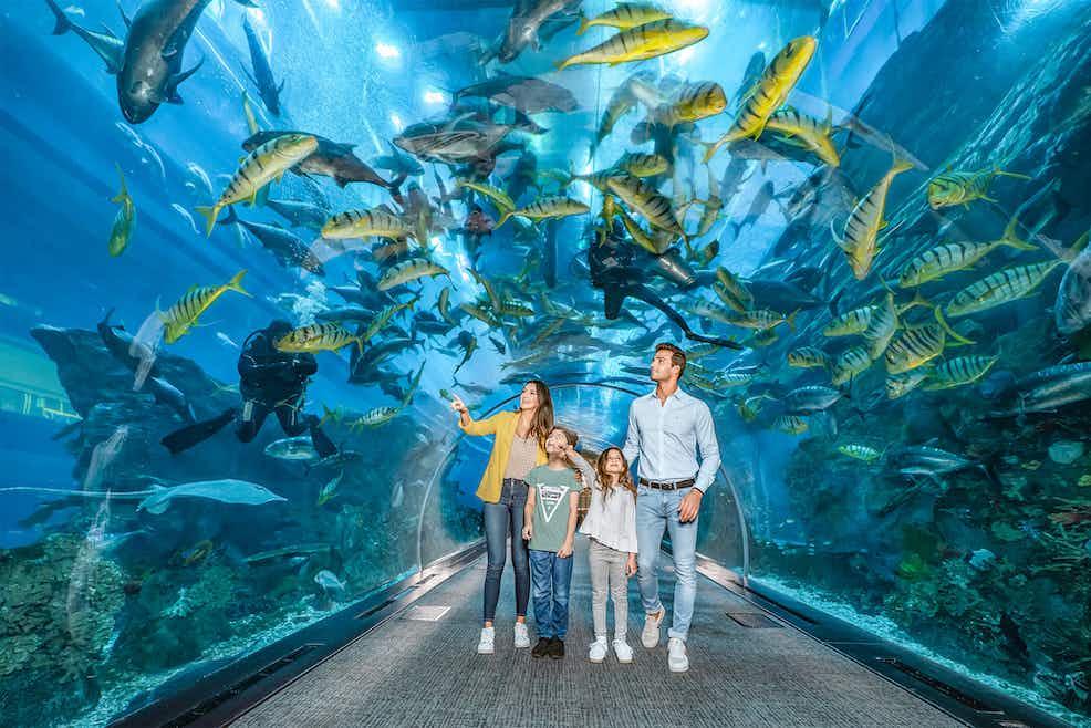 Dubai Aquarium & Underwater Zoo - View the King Croc!