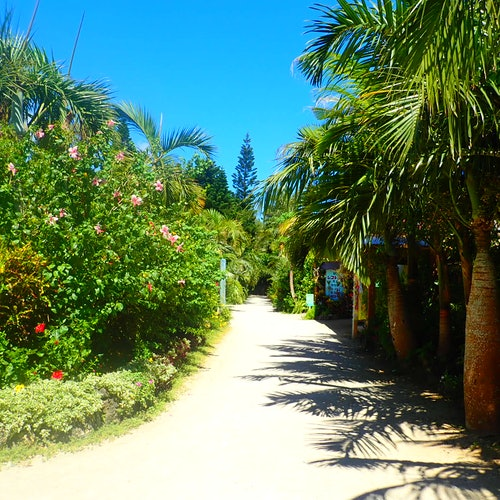 Isla Yubu: SUP de manglar y piragüismo