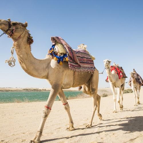 Safari por el desierto con sandboarding y paseo a camello desde El Cairo o Guiza
