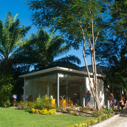 Discover Mexico Park Cozumel: Entrada + Taller de alebrijes