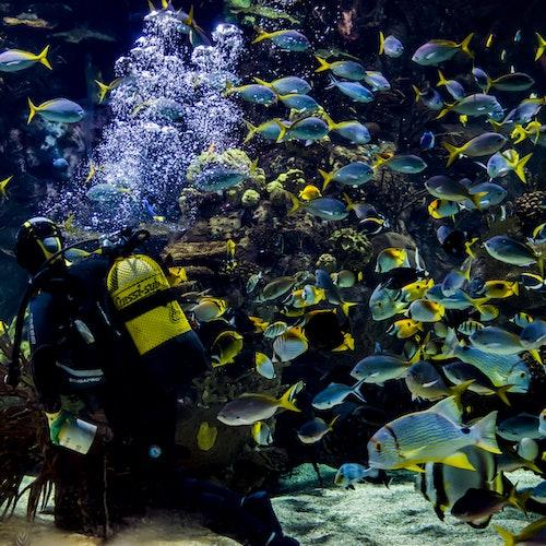 Oceanogràfic y Museo de las Ciencias: Sin colas