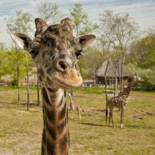 Zoo de Nashville en Grassmere: Acceso rápido