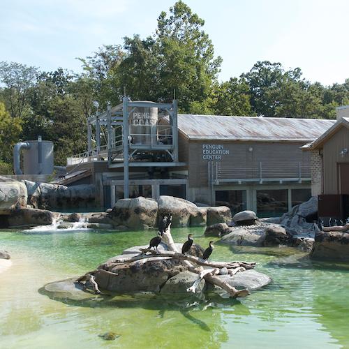 Zoo de Maryland: Sin colas