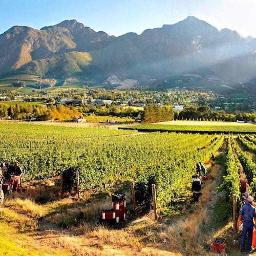 Franschhoek y Stellebosch: Visita guiada y cata de vinos