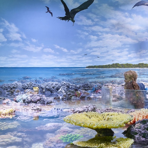 Cairns Aquarium
