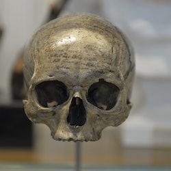 Imagen Musée de l'Homme: Sin colas