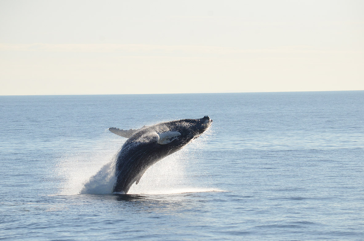 Tickets for Boston Harbor Whale Watch Cruise