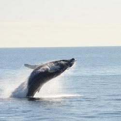 Boston Harbor Whale Watch Cruise