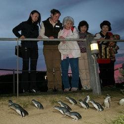 Tickets, museos, atracciones,Excursión a Isla de Phillip