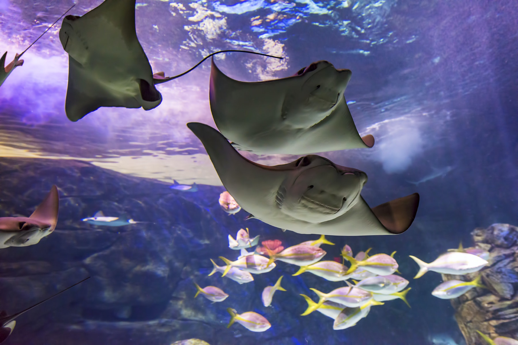 Tickets for Ripley's Aquarium of Canada: Skip The Line  Image