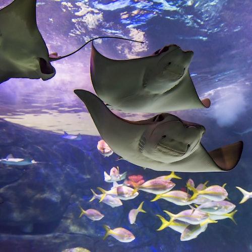 Ripley's Aquarium of Canada: Sin colas
