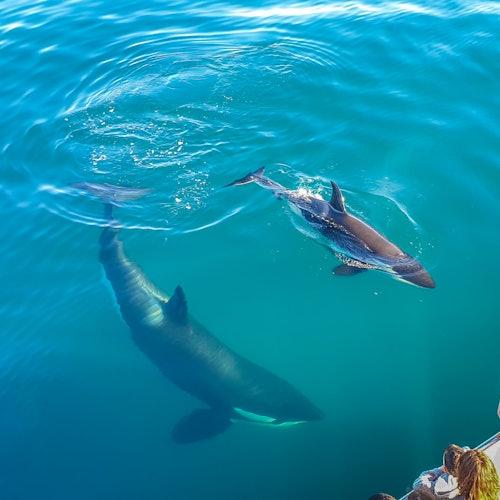 Safari de ballenas y delfines en Auckland