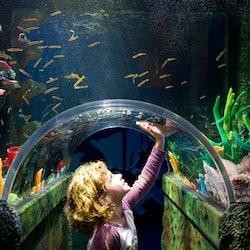 Tickets, museos, atracciones,Acuario Sea Life