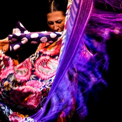Flamenco Dance Museum - Show Only