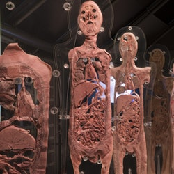 Imagen Ausstellung Human Bodies: Ohne Anstehen