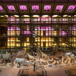 Imagen Grande Galerie de l'Évolution: Sin colas