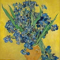 Tickets, museos, atracciones,Tickets, museums, attractions,Con otras actividades,Museo Van Gogh,Van Gogh's Museum