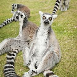 Imagen Zoo de Whipsnade ZSL