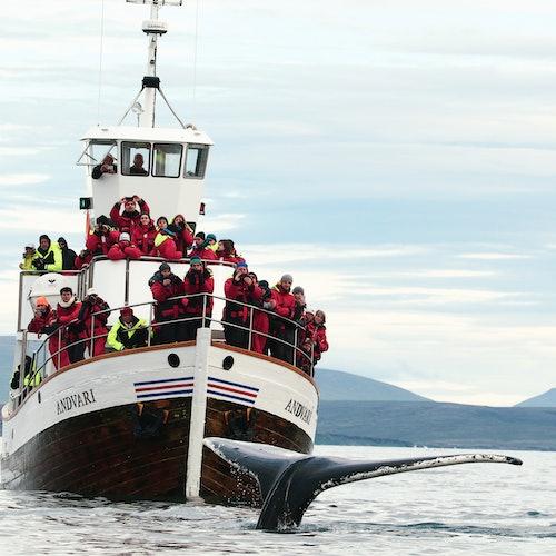 Observación de ballenas en silencio: tour desde Húsavík