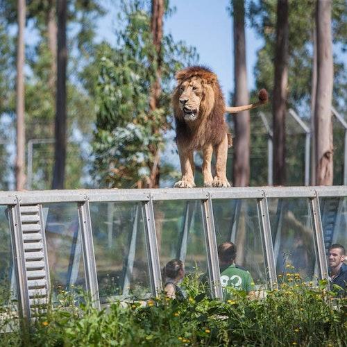 Zoo Santo Inácio: Sin colas