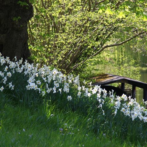Jardín Botánico de Utrecht