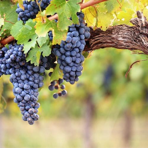 Saint-Émilion: Tour de vinos de un día desde Burdeos