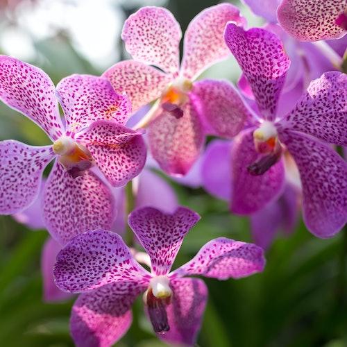 Kuala Lumpur Bird Park, Orchid Garden, Butterfly & Deer Garden Tour