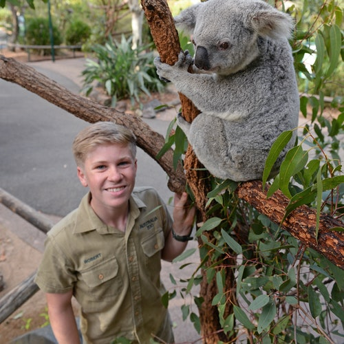 Australia Zoo: Entrance & Transfers from Brisbane, Noosa or Sunshine Coast