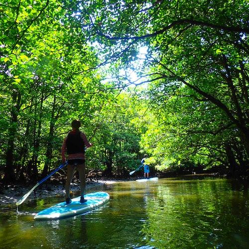 SUP de manglar o canoa y barranquismo