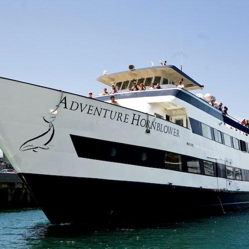 Crucero de 2 horas + Observación de leones marinos
