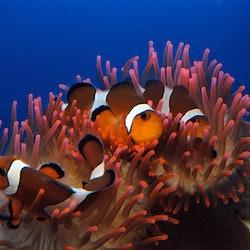 Aquarium of Genoa & Palazzo Reale: Skip The Line