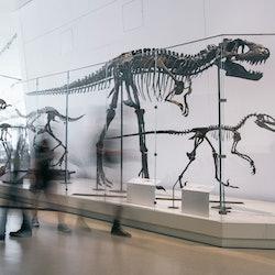 Tickets, museos, atracciones,Real Museo de Ontario