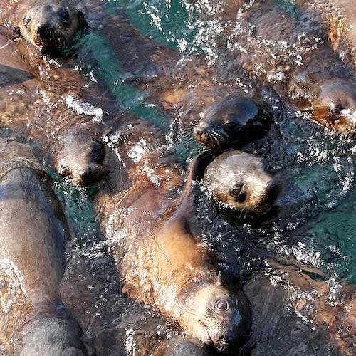 Phillip Island Seal Watching Cruise