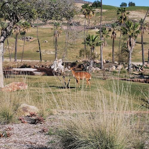 Zoo de San Diego Safari Park