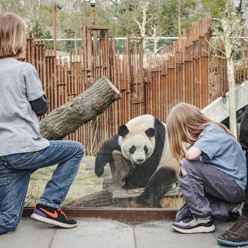 Zoo de Copenhague: Sin colas