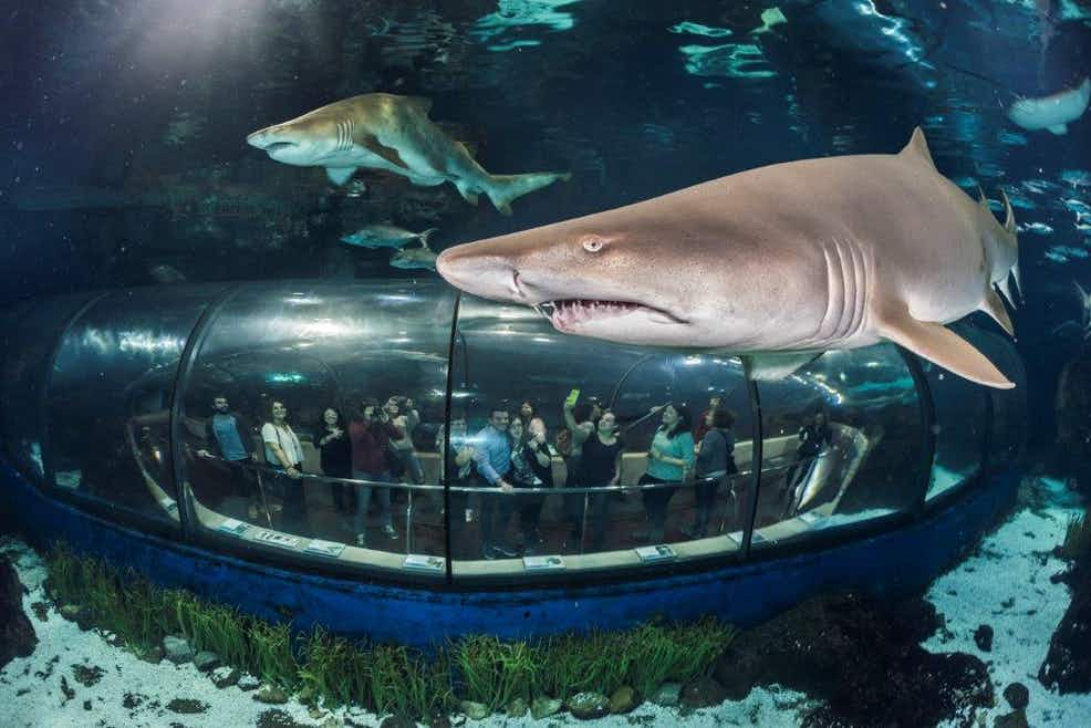 Barcelona Aquarium Tickets | Tiqets
