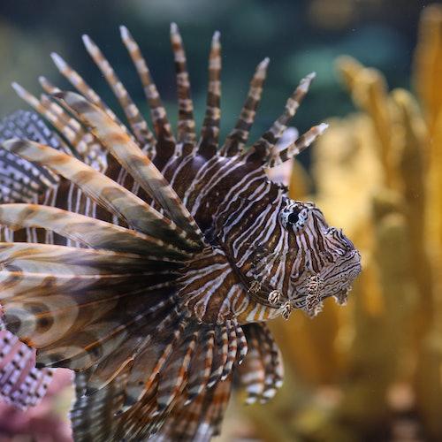 Ripley's Aquarium of Myrtle Beach: Skip The Line