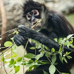 Nashville Zoo at Grassmere: Fast track