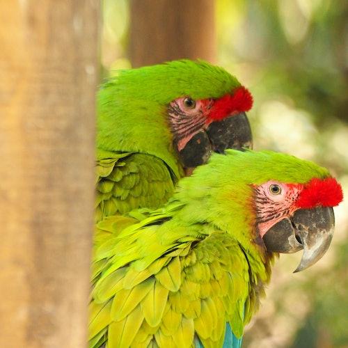 Parque de la Conservación Medellín: Sin colas