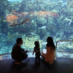 Aquarium of the Pacific: Membership Voucher