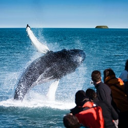 Tickets, museums, attractions,Whale Watching from Húsavik