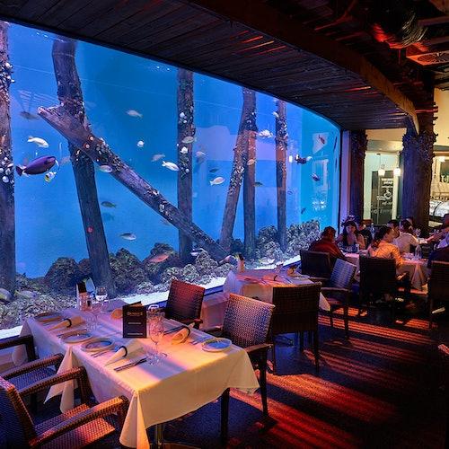 Cairns Aquarium de Crepúsculo con cena