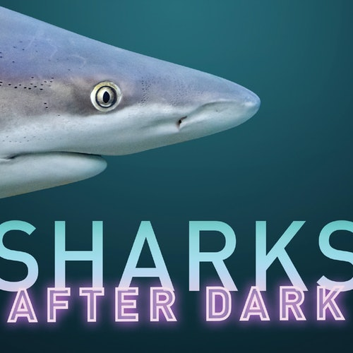 Acuario Ripley de Canadá: Sharks After Dark