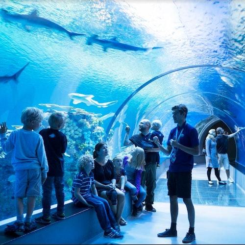 Hop-on Hop-off Bus 72H & Blue Planet Aquarium